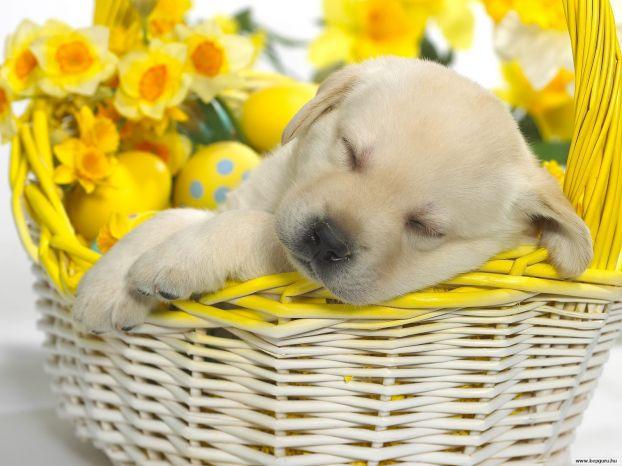 Психика собак подвержена депрессии, как и психика человека