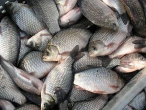 Морские сорта рыбы могут помочь избавиться от депрессии