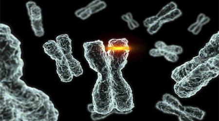Длина хромосомы зависит от депрессии