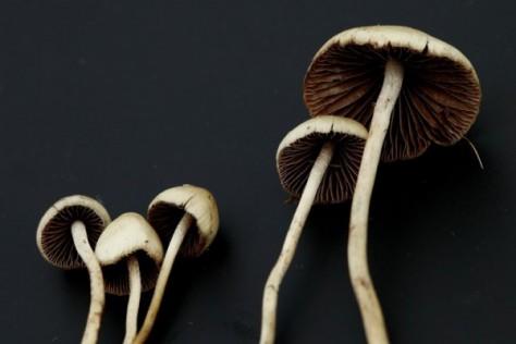 Депрессия лечится грибами
