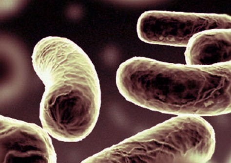 Как пробиотики помогают от депрессии?