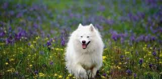 Сезонная болезнь собак