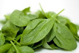 Первую зелень даст шпинат