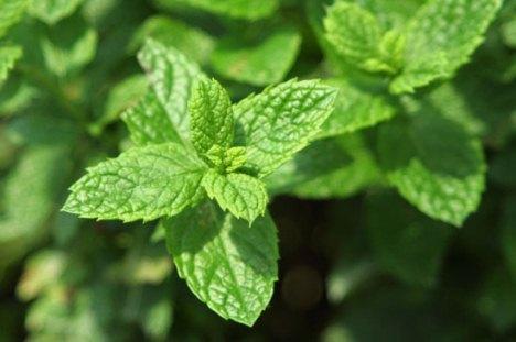 Растения-антидепрессанты