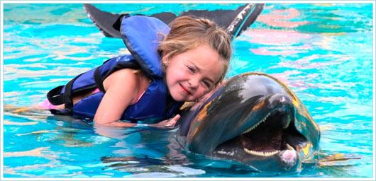 Дельфины — целители или дельфинотерапия