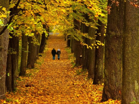 Прогулка в парке заменит антидепрессанты