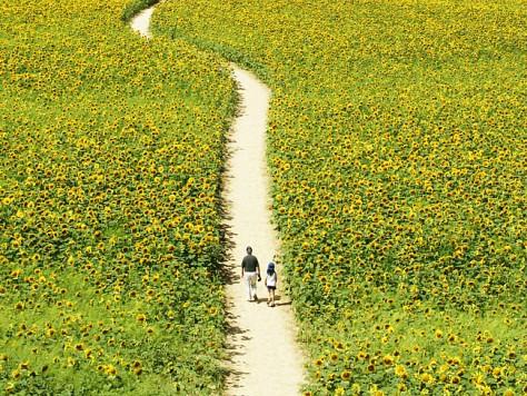 Прогулки на природе защищают от депрессии