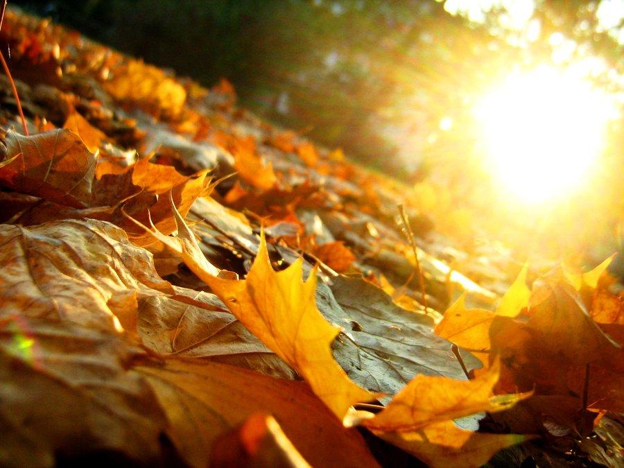 Осенняя депрессия: найти и обезвредить