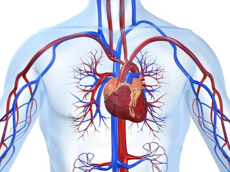 Болезни сердца приводят к стрессу и депрессии