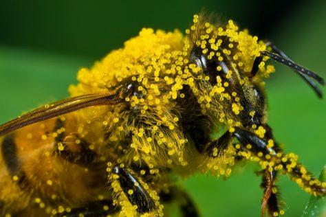 Лечение депрессии пыльцой