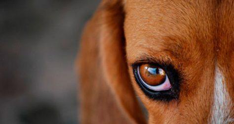 Воспаление глаз у собак: лечение в «Био-Вет»