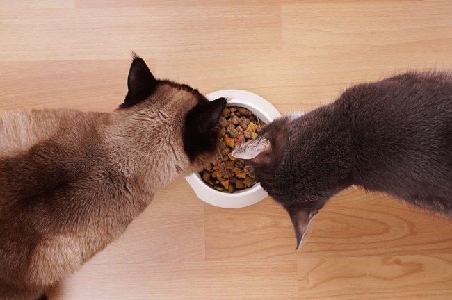 Какой кошачий корм лучше: влажный или сухой?
