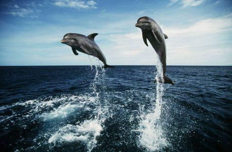 Дельфины лечат от депрессии