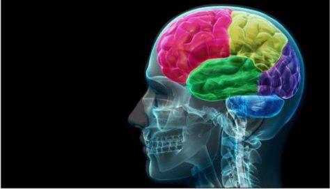 Депрессия приводит к изменениям в структуре мозга