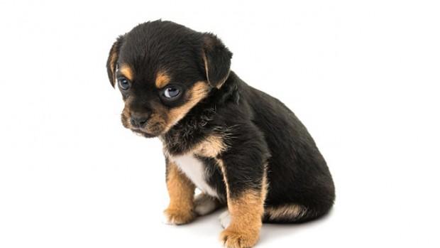 Наличие домашнего животного может стать причиной развития депрессии