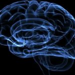 Мозг педофилов: аномалий не выявлено