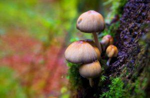 Псилоцибиновые грибы вылечили депрессию