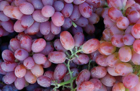 Ученые назвали виноград лучшим антидепрессантом