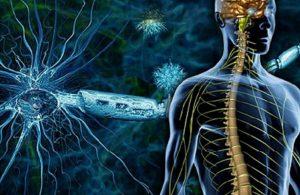 Столовые клетки останавливают рассеянный склероз