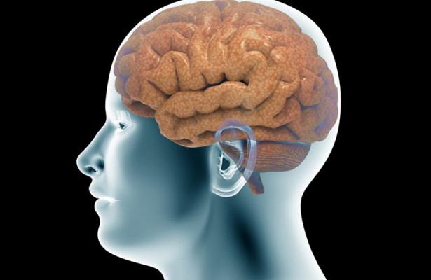 Как мозг компенсирует стресс при учебе?
