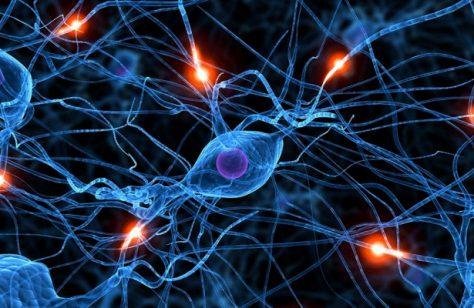 Остановить иммунные клетки: разработан новый подход к лечению рассеянного склероза