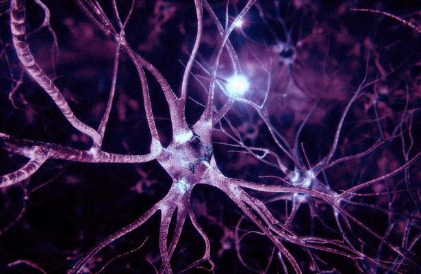 Нервные клетки теперь восстанавливаются