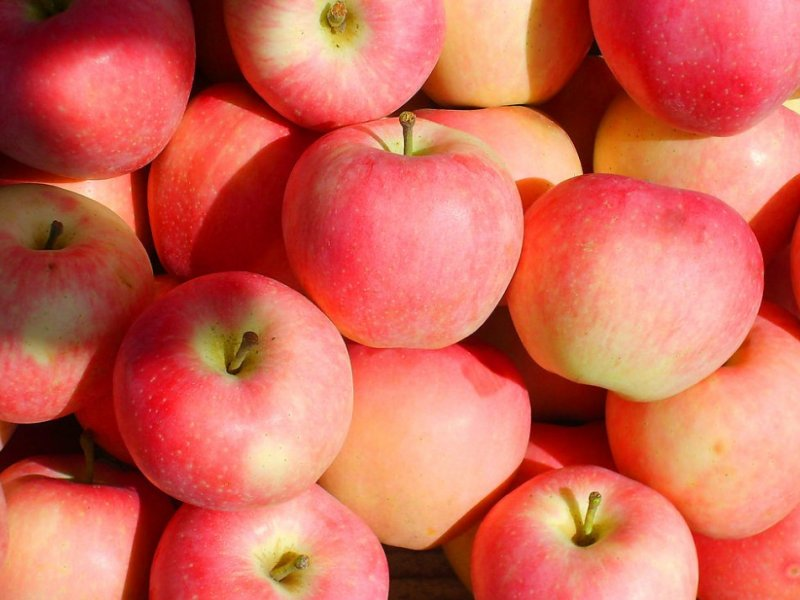 Экстракт китайского яблока – средство от депрессии и тревожности