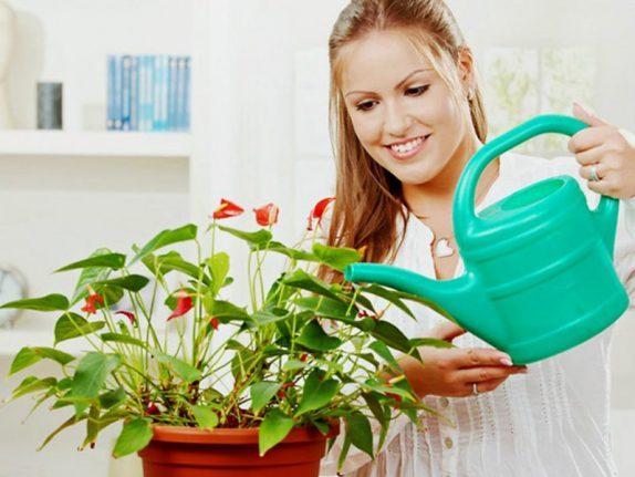 Цветы в доме способствуют хорошему настроению