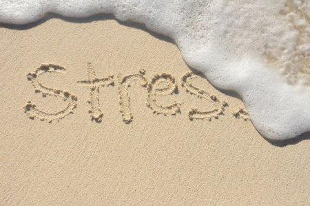 В жаркую погоду увеличивается стресс