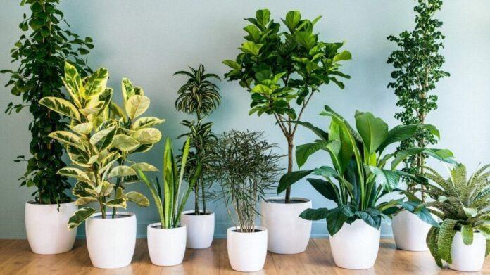 Названы растения, которые благоприятно действуют на нервную систему