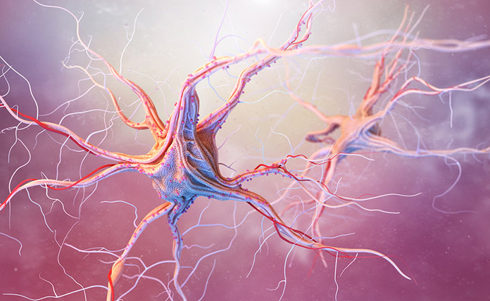 Что нужно съесть, чтобы восстановить нервные клетки
