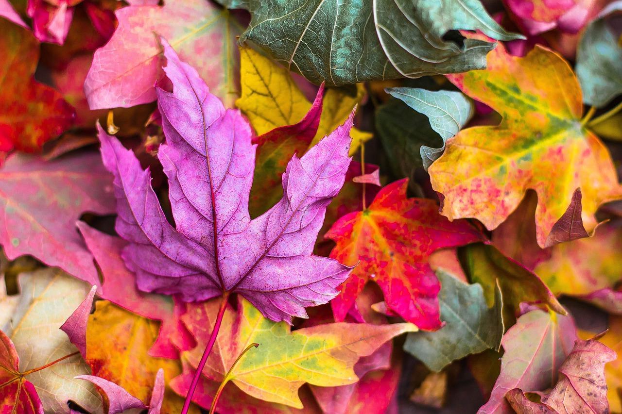 Осенняя депрессия: три действенных способа, как не поддаться хандре