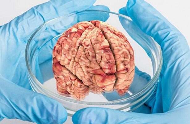 Ученые обнаружили в мозге рецептор, отвечающий за плохое настроение