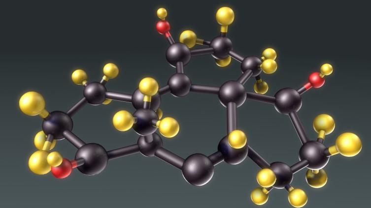Зачем нужны стероидные гормоны?