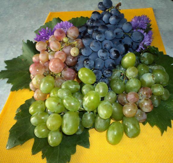 Ампелотерапия — лечение виноградом